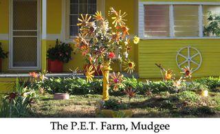 Pet farm